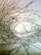 pencil sketch by Indira- Arrangement of twigs by a bird f to make its nest