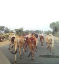 Rural area, roads are for everyone
