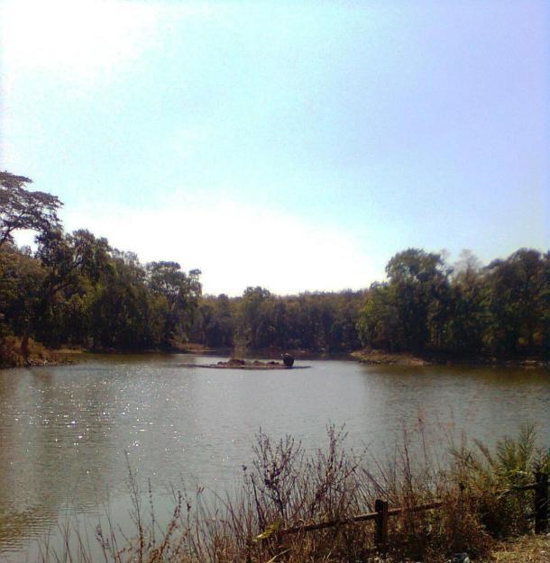 Photograph near Pench Tiger Reserve- Indira