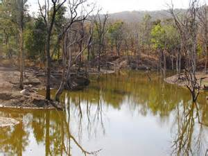 Pench Reserve Forest India (2)