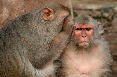 gossiping?