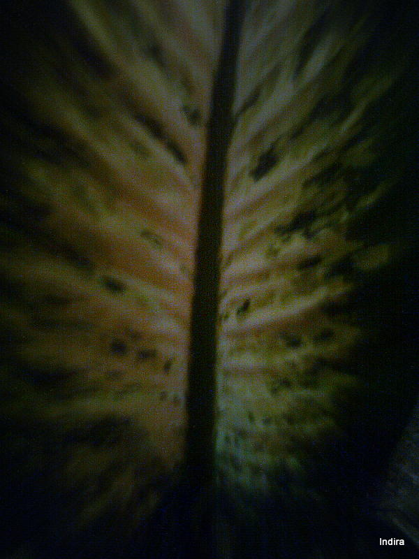 Front side of a leaf
