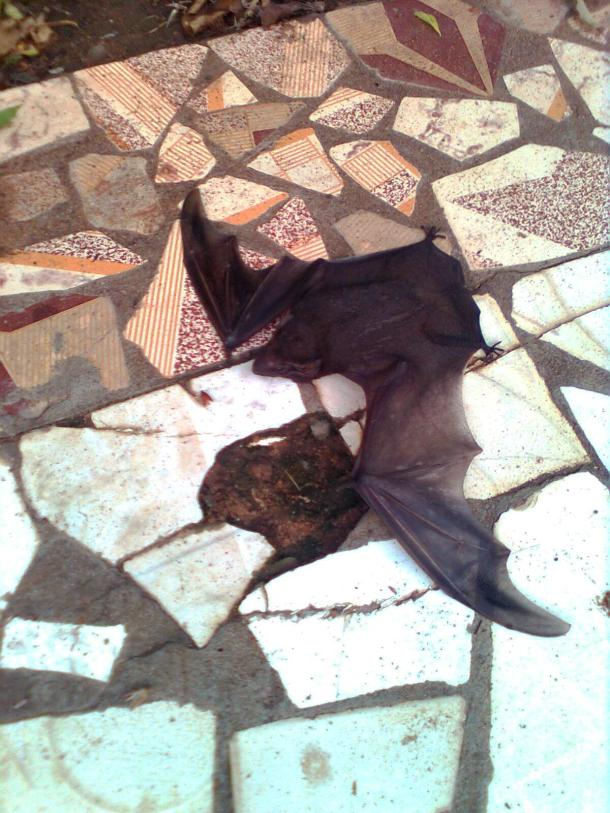 Bat lying on the ground