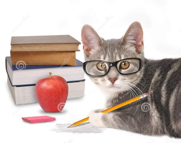 http://www.dreamstime.com/royalty-free-stock-photos-smart-cat-writing-books-white-gray-holding-pencil-scribble-isolated-background-training-humor-image43812948
