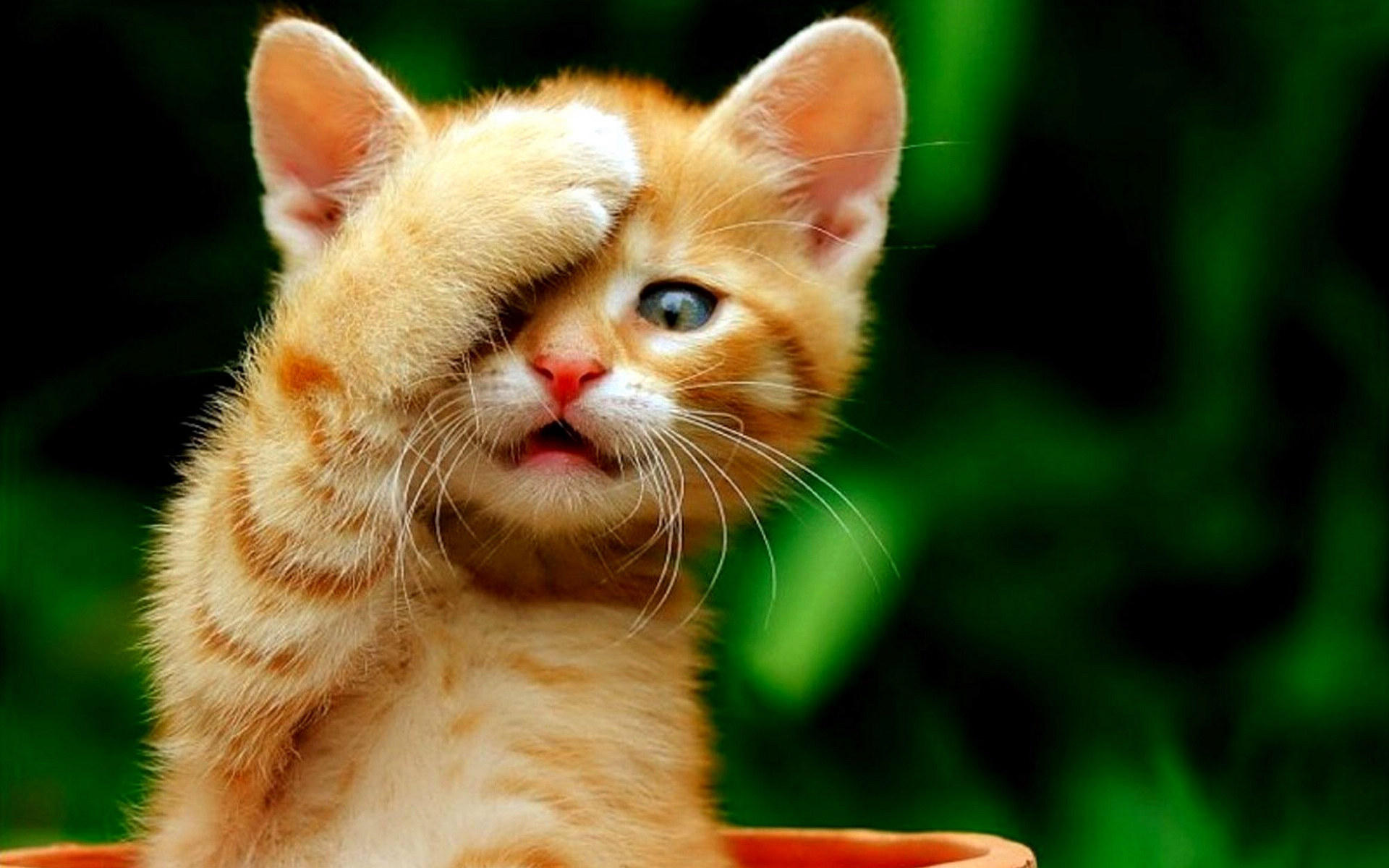 Cute Cats Wallpaper Hd 26 Wide Wallpaper Sharing Thoughts